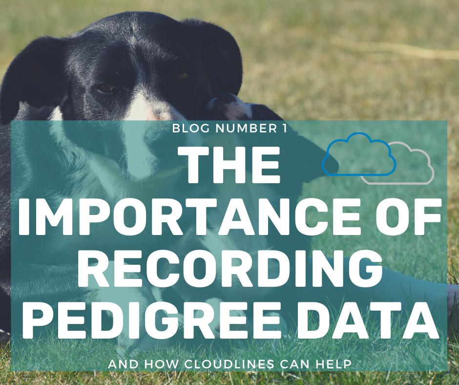 Four Benefits of Pedigree Recording